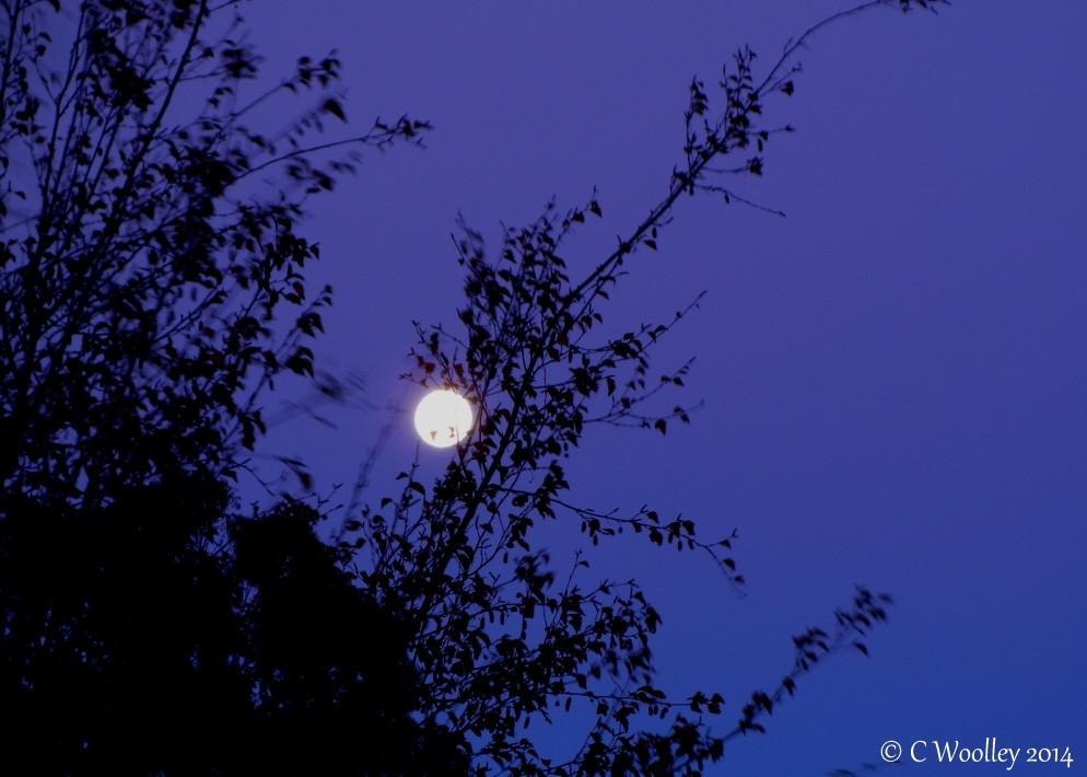 blue moon sky (3)