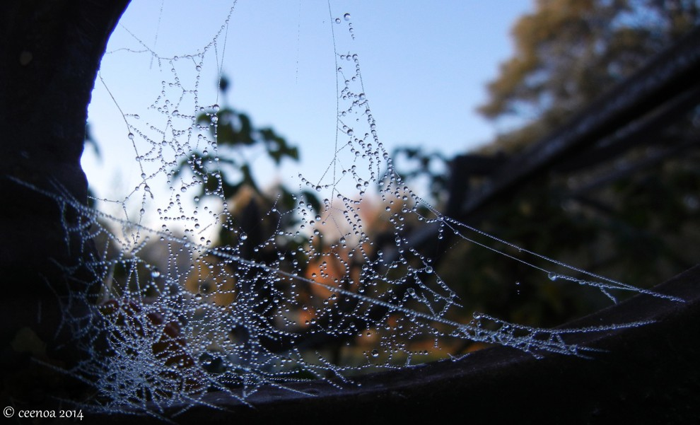 Jewelled Web