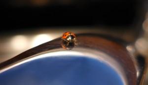 ladybug (3)