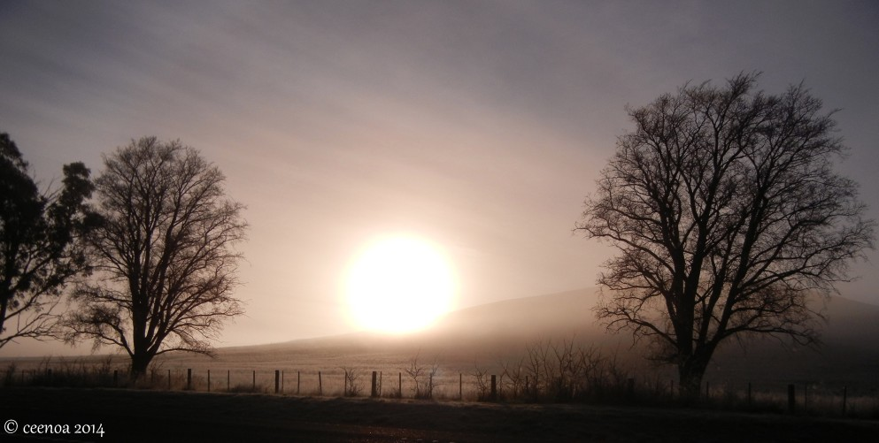 Sun through frosty mist