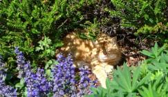 Sunny Day Nap