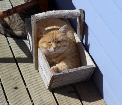 Sometimes it's good to stay in your box