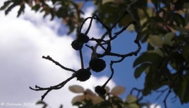 View through a tree