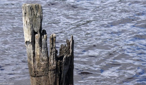 Old Jetty Piers - Huon River, Tasmania