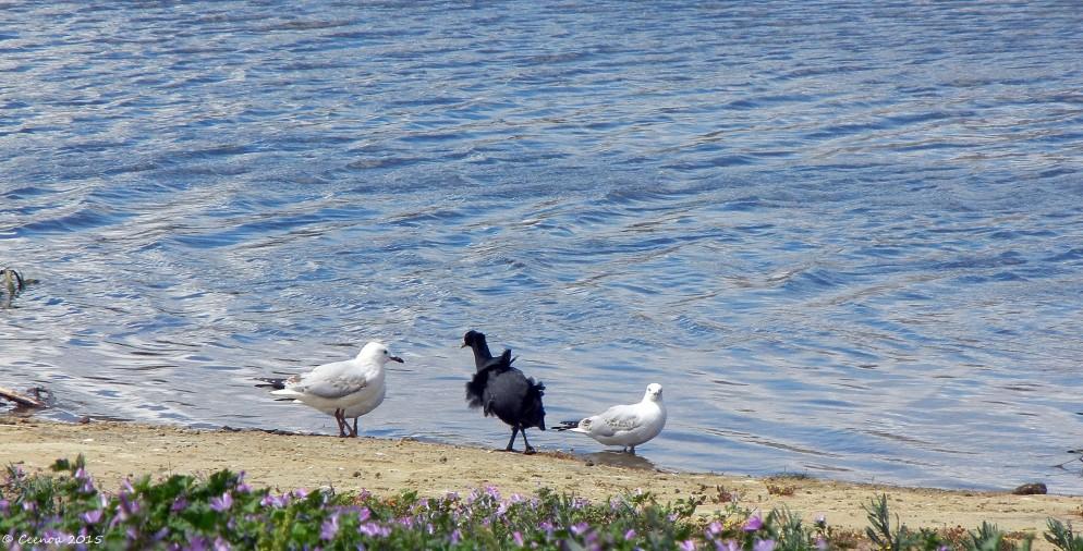 Ruffled Feathers, Lake Dove, Oatlands, Tasmania
