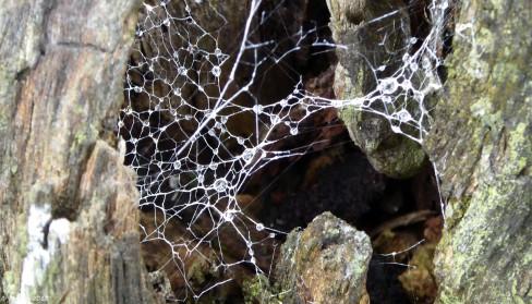 Cobweb Drops