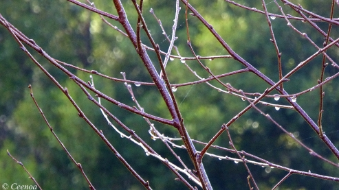 Droplet Branches