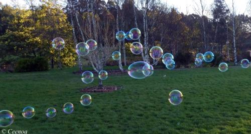 evening bubbles (1)