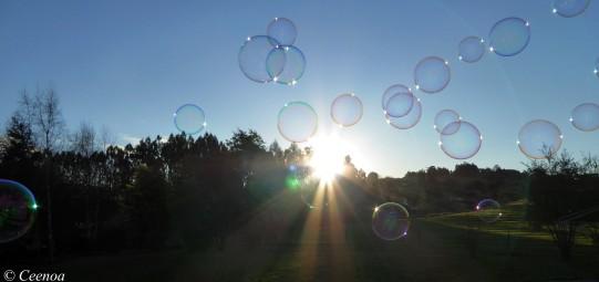 evening bubbles (4)