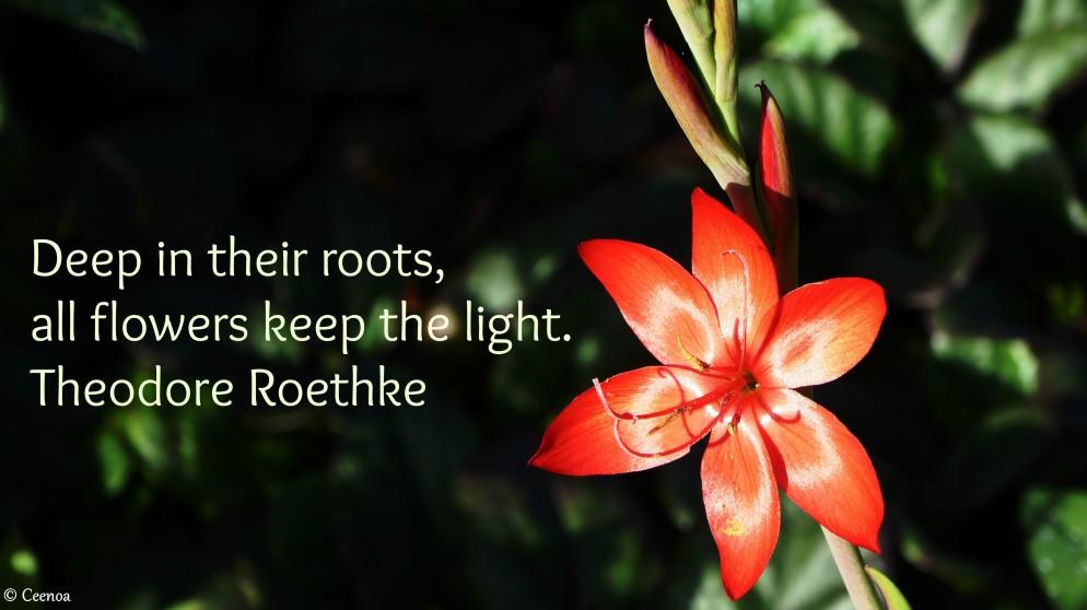 Theodore Roethke Quote