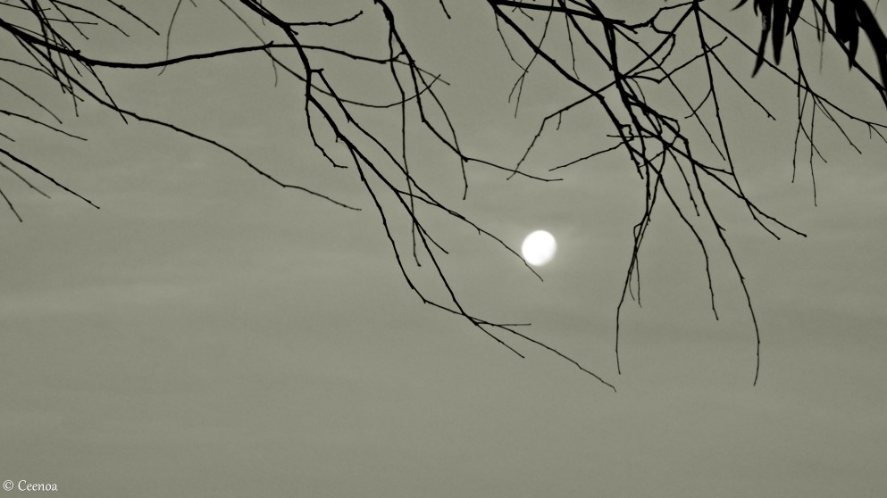 Moon thru branches (2) bandicoot