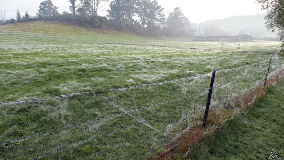 Cobwebbed Paddock (4)