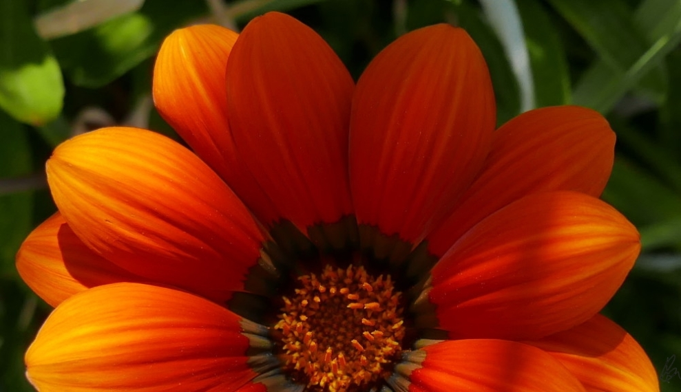 orange-roadside-flower-large