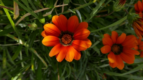 orange-roadside-flowers
