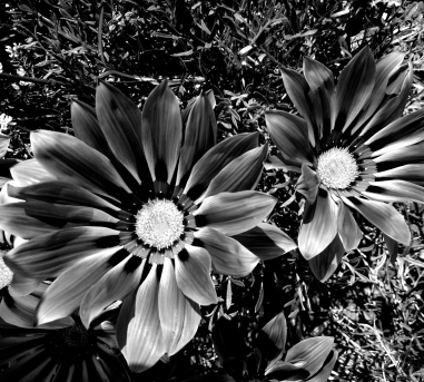 bw-flower