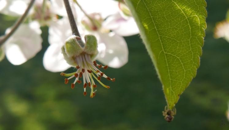 tiny-spider