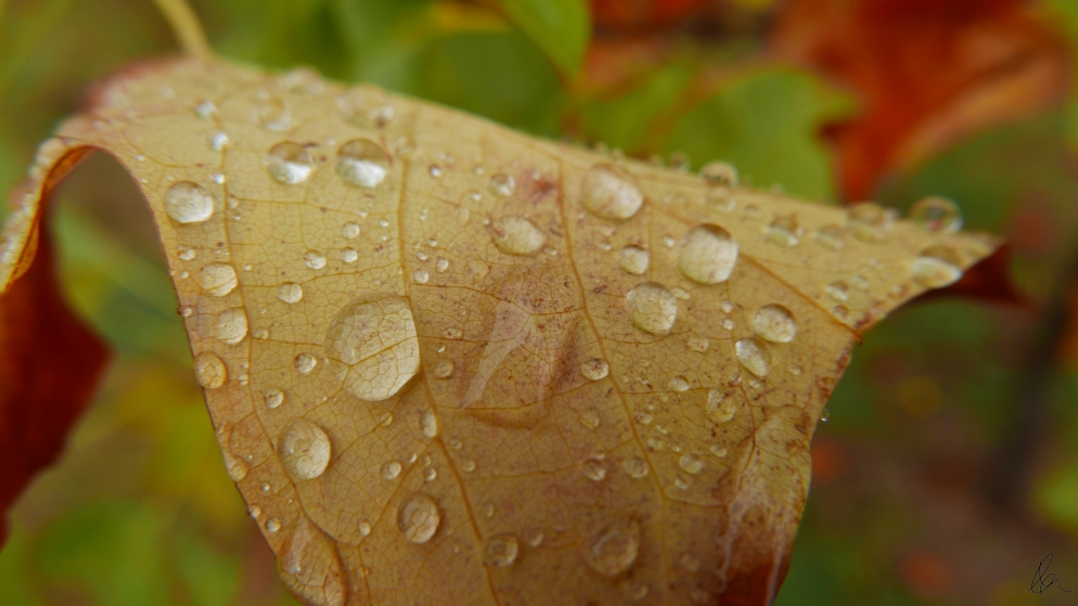 Leaves (4)