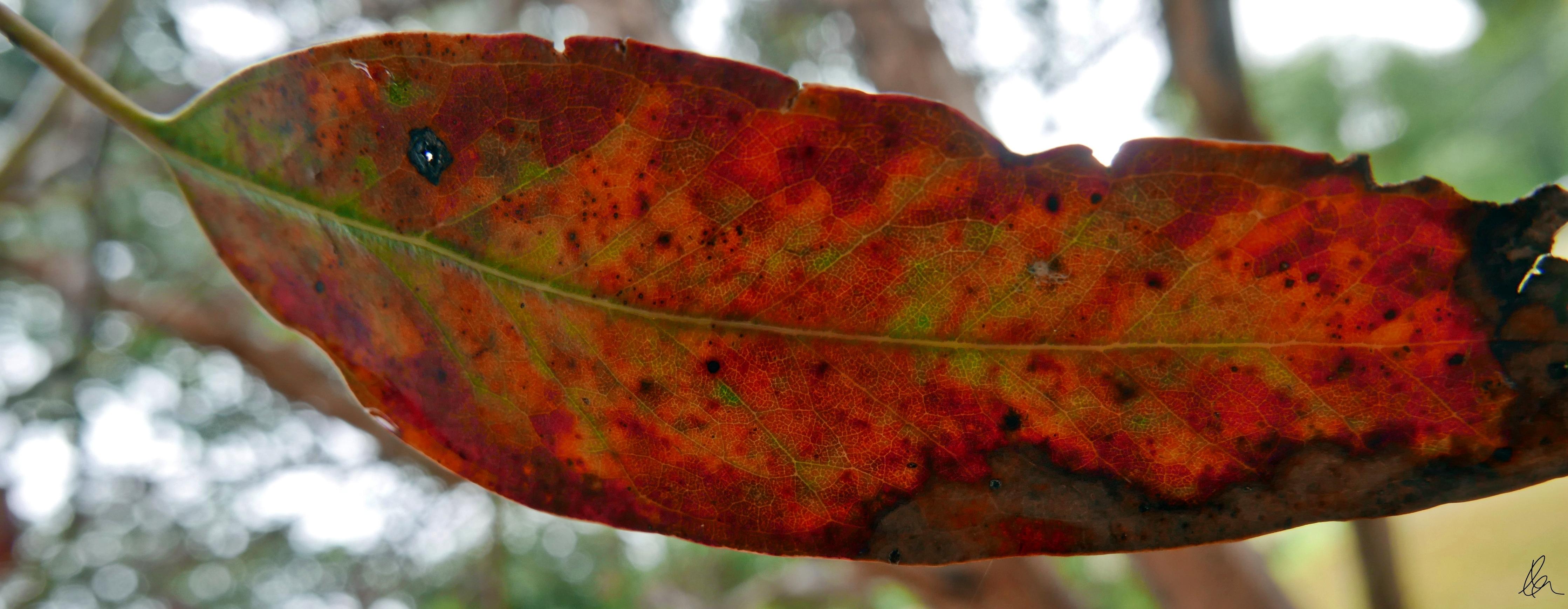Leaves (7)