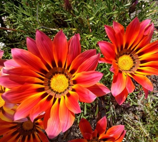 Flower (2)