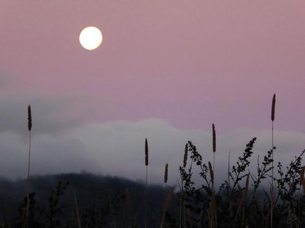 May Moon (1)