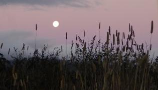 May Moon (5)