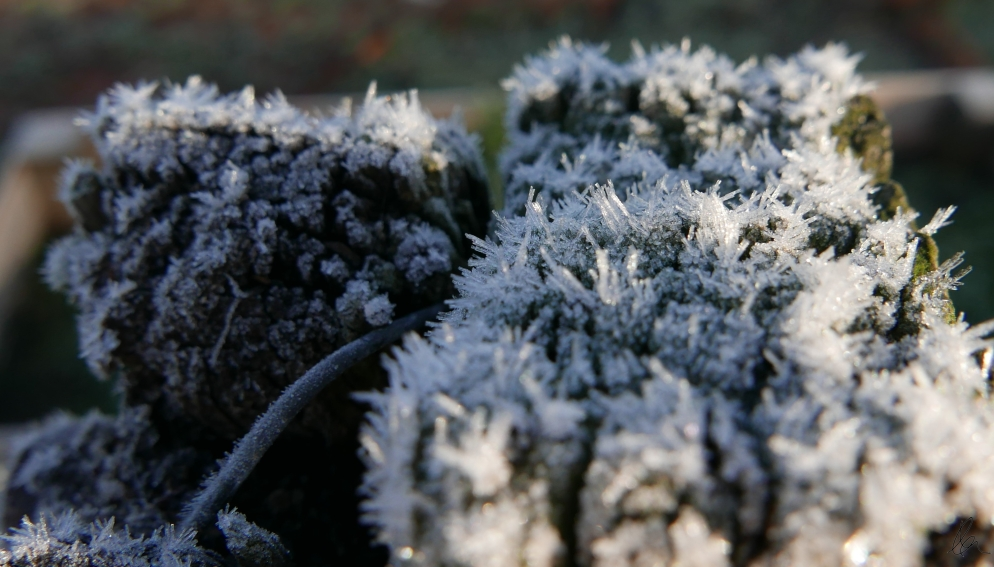 Frosty Post