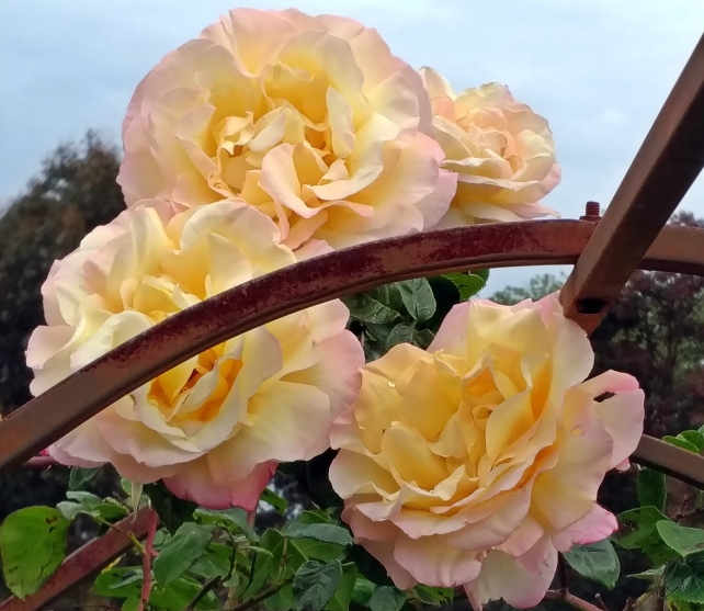 Peace on Rose Arch (1)