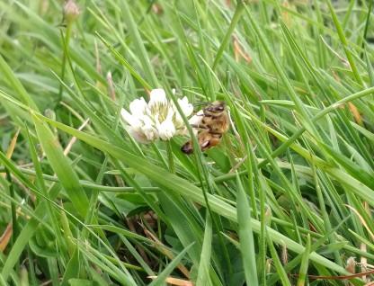 Clover & Bee (11)