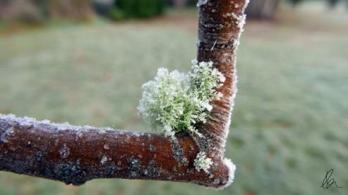 June Frost (10)
