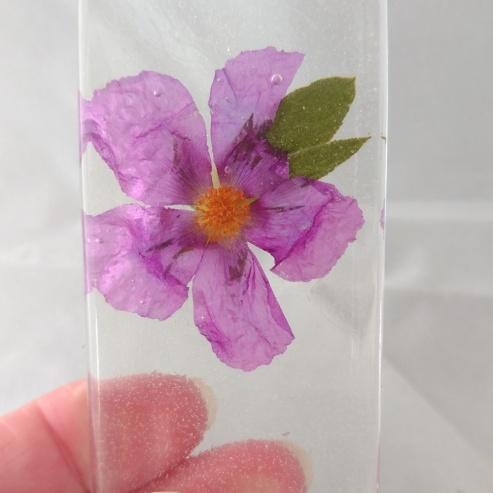Rock Rose (1)