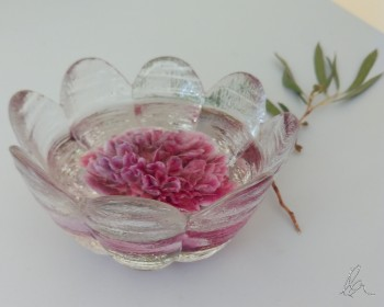 Camellia in Glass