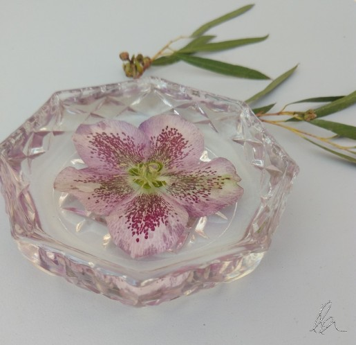 Hellebore in Glass