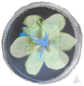 Deep Purple Crocus inverted and framed