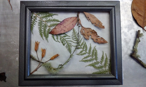 Fern, Seed and Leaves #1
