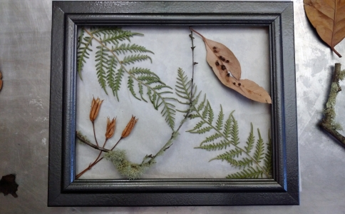 Fern, Seed, Twig and Leaf #2