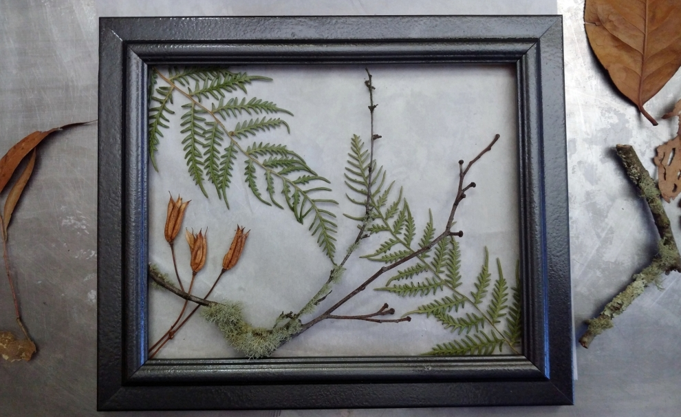 Fern, Seed and Twigs